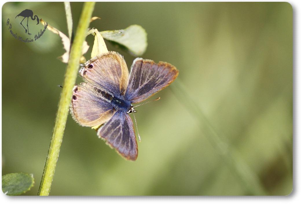 Papillon non identifié...