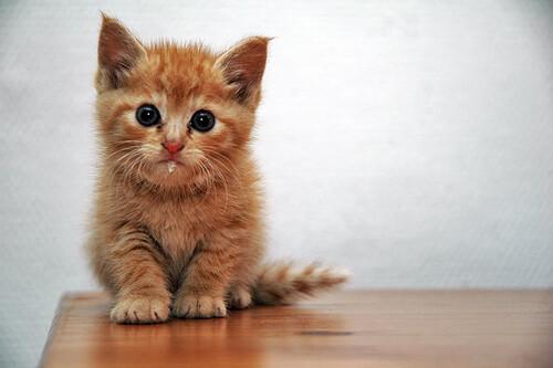 le chat ...
