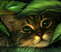 Avatar Chat  Série 1
