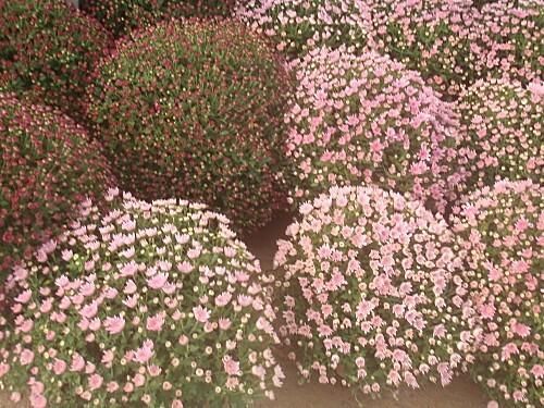 fleurs d'automne 028