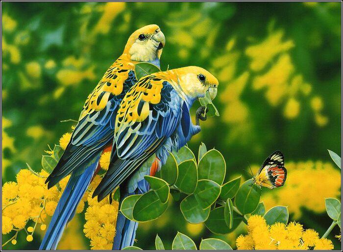 Une série de photos d'oiseaux