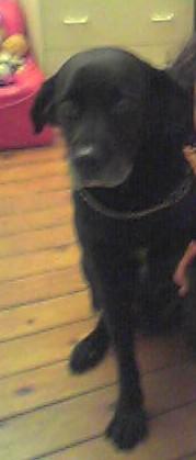 Photos du chien de Tsuki (Mal)