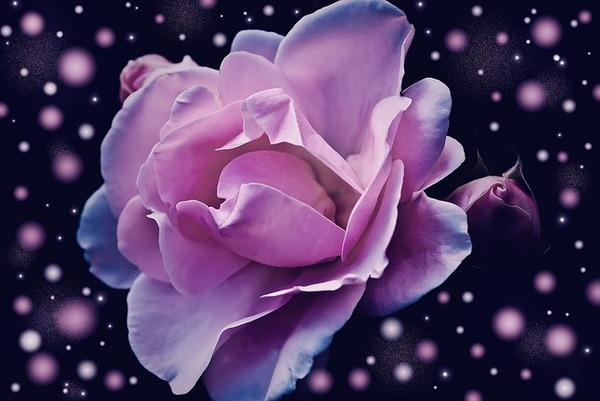 De fleurs en fleurs, la rose !