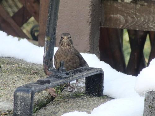 Un nouveau visiteur dans le jardin