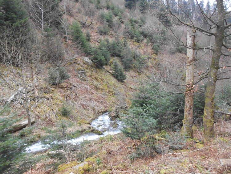 Vosges- le ruisseau des charbonniers