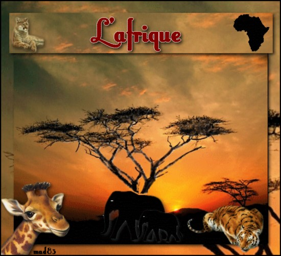 CONCOURS AFRIQUE
