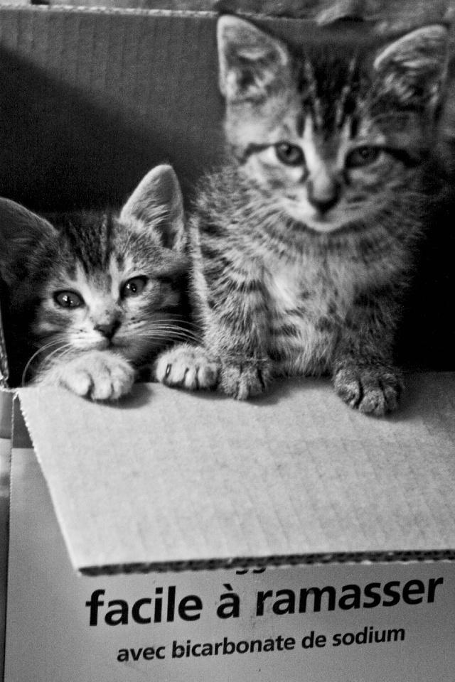 2 Chatons dans un carton