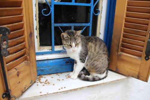 Chats de Grèce