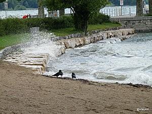 baby-plage-geneve2010-255--4-.jpg