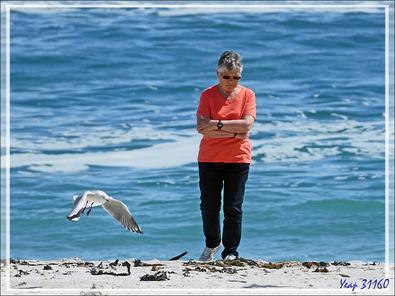 La belle et les mouettes de Hartlaub - Camps Bay - Cape Town - Afrique