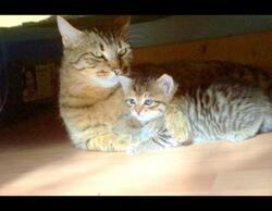 Désir d'adopter un chaton, impération pour qu'il devienne un petit compagnon heureux, et vous avec !