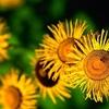 fleurs_106.jpg