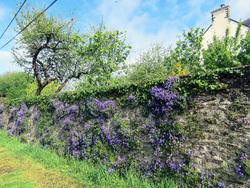 Sur le chemin  de la Bretagne (2) - Pluvigner