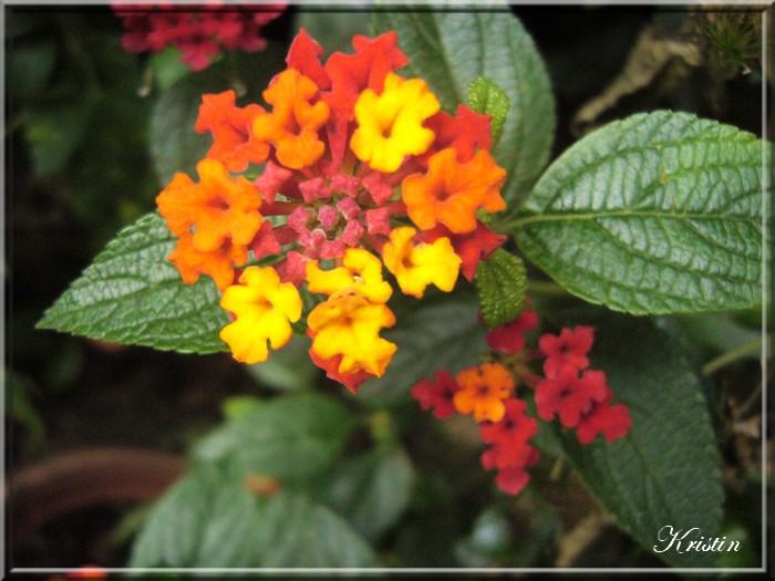 "Plantes ""cache-baignoire""..."