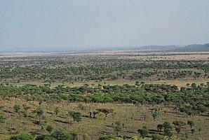 serengeti-serena-safari