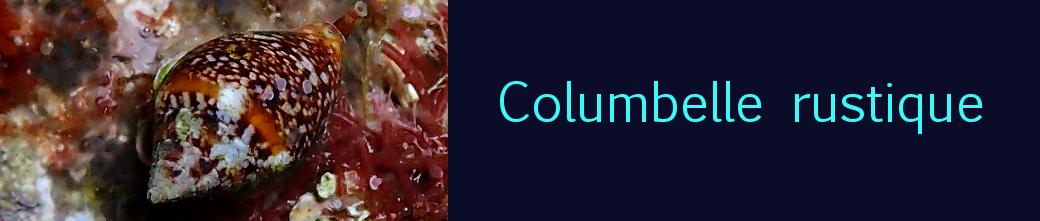 Columbelle rustique