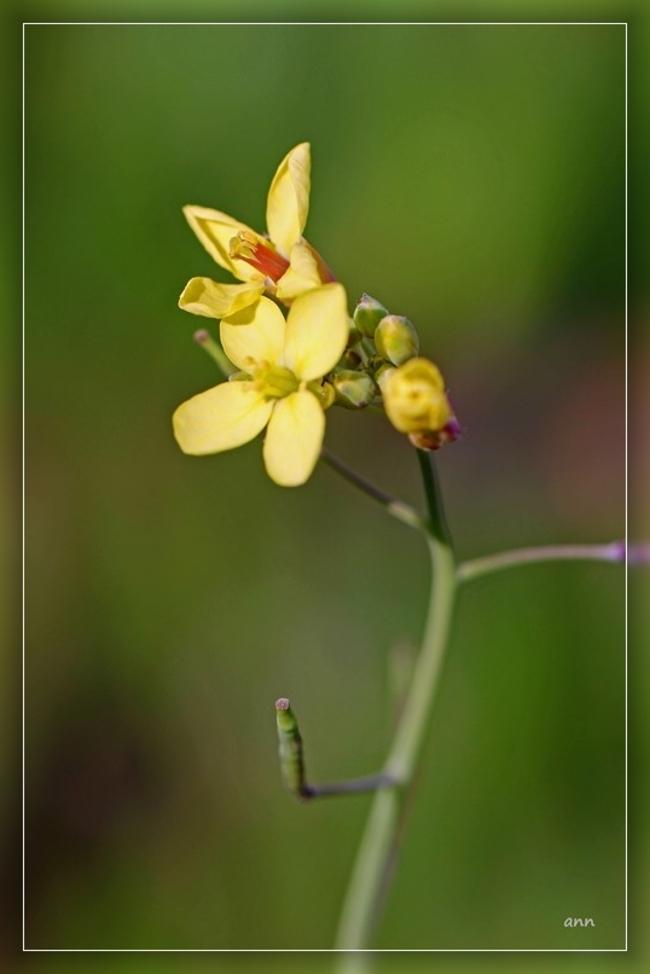 Les petites fleurs