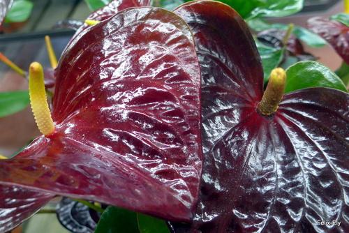 Un plante aux belles couleurs
