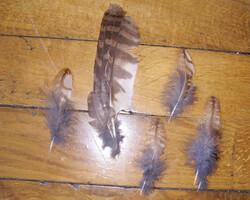 plumes de chouette