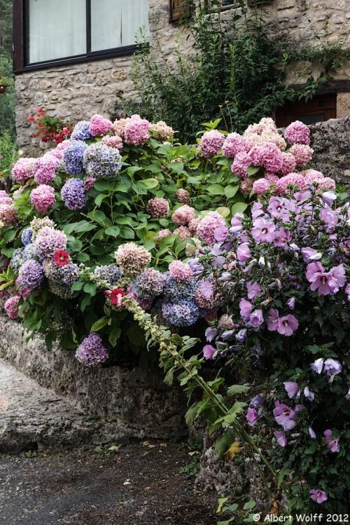 Les fleurs de mes vacances (part 3)