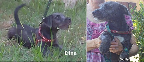 Dina-et-Dolly.jpg