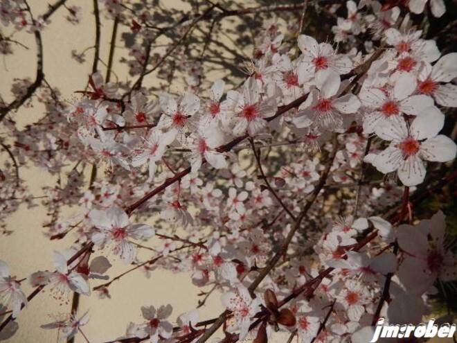 Jardin fleuri et weekend de mars sans pluie....