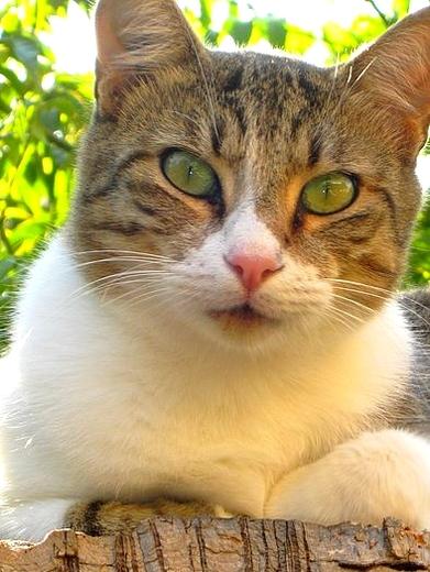 Les Chats du Maquis à Parrainer