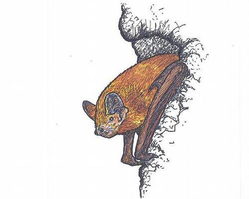 Les pipistrelles de la maison de la forêt.