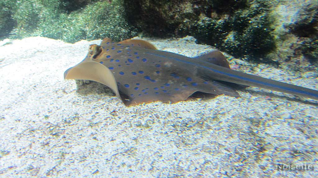 Aquarium de la Rochelle (4)