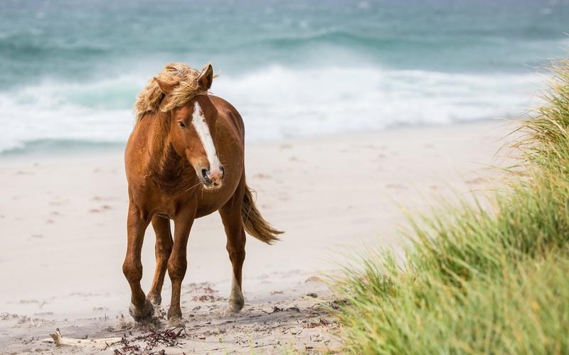20 photos d'animaux