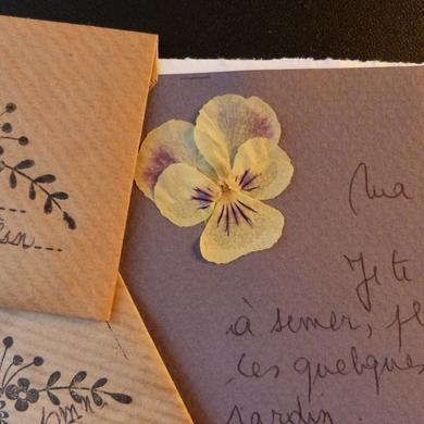 Seeds Of Love 2016 : affectueuse pensée d'un jardin à l'autre