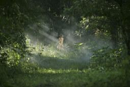 Dans la brume électrique: Tommy Lee Jones