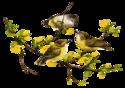 PNG-Állatok