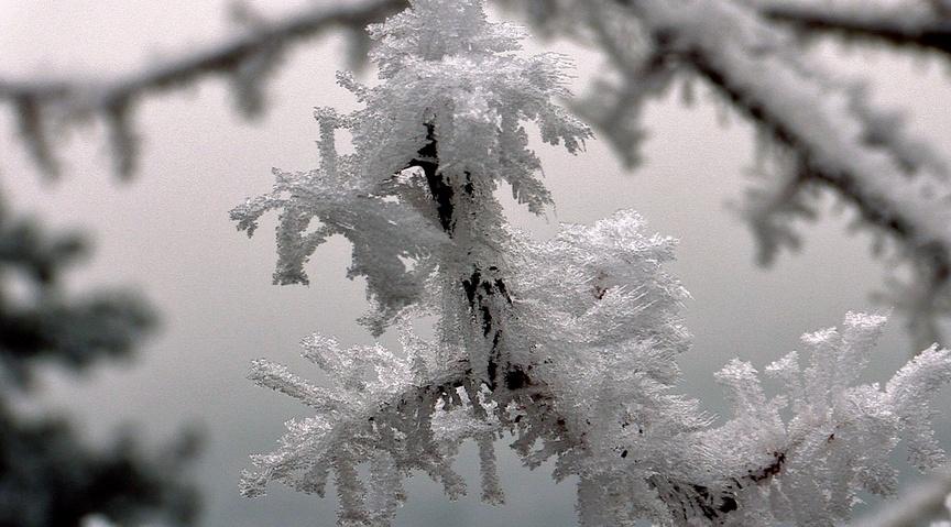 L'hiver des ragondin (2)