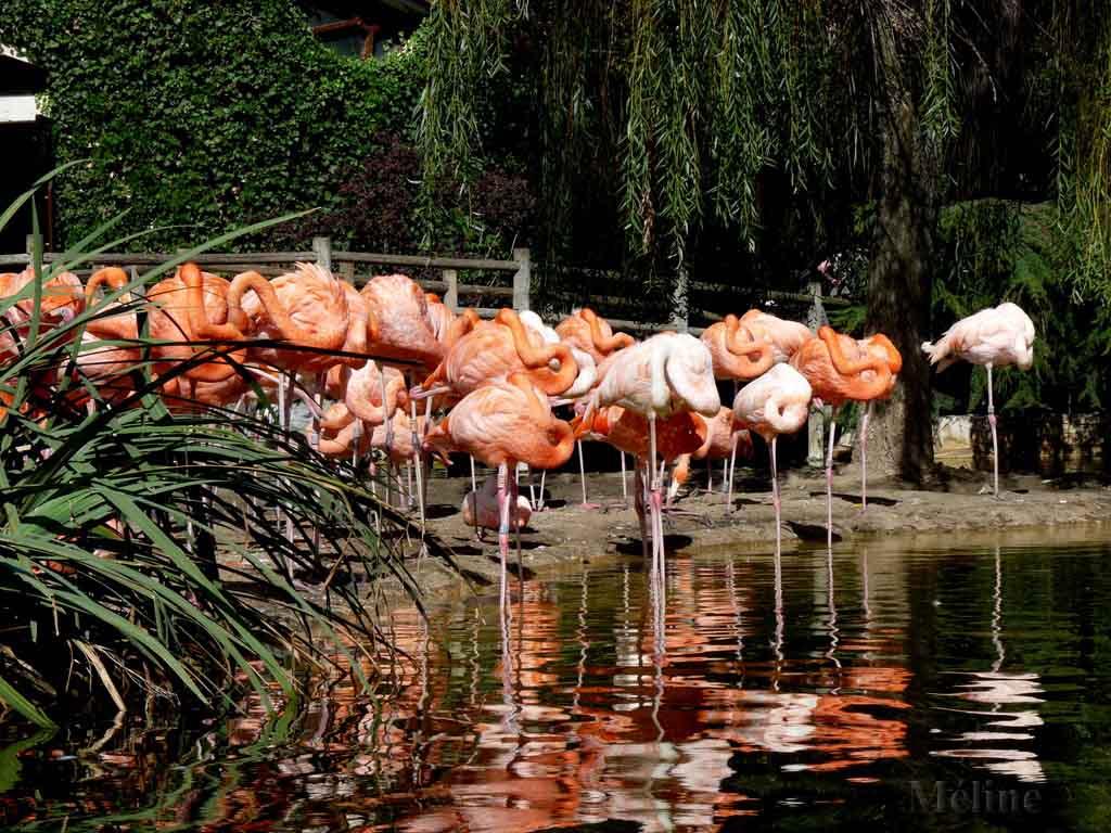 Le zoo de la Palmyre à Royan !