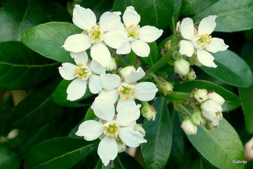 Les fleurs de mon jardin : en décembre!