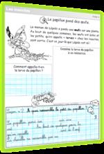 Les papillons - Séquence CP/CE1