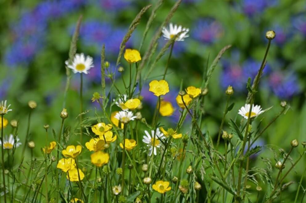 Fleurs-13-2284.jpg
