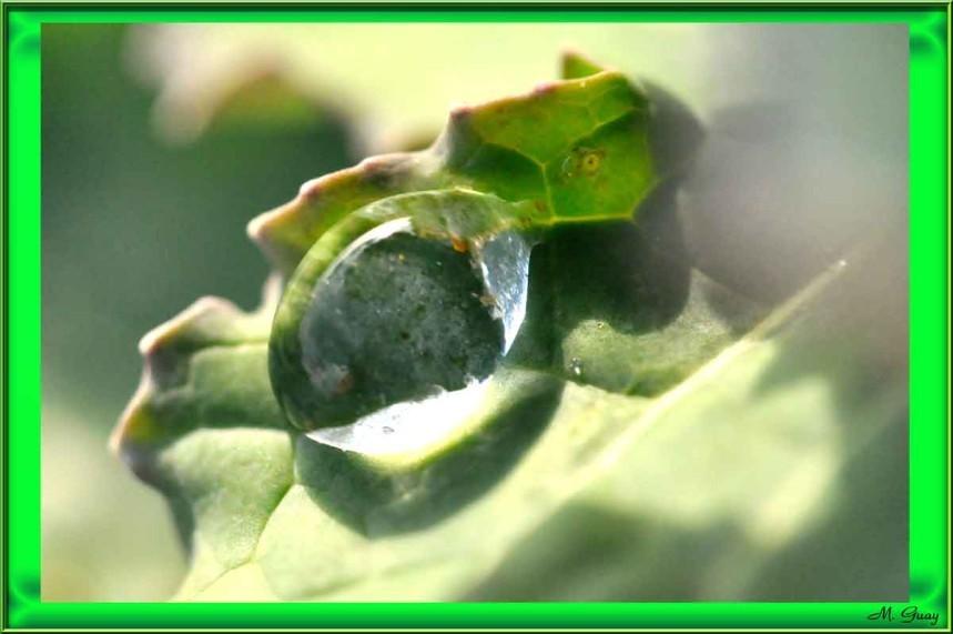 goutte-cristalline-4557.jpg