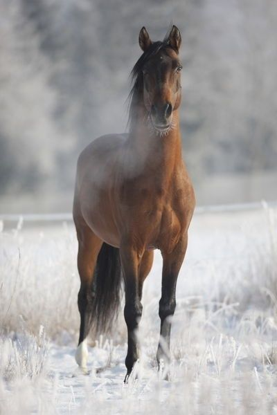 Horse. On a cold & frosty morning... http://www.annabelchaffer.com/categories/Dining-Accessories/