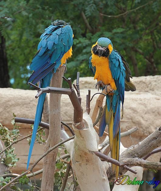 """parroquet """" la Palmyre"""""""