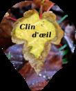 Breille sur Courtepin, un champ de Phacélies à feuilles de tanaisie (Phacelia tanacetifolia)   Hydrophyllaceae