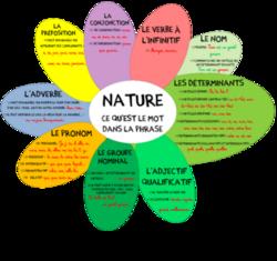 Les natures et les fonctions des mots