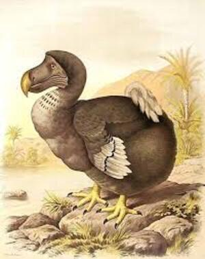 Des dodos au Costa Rica ?