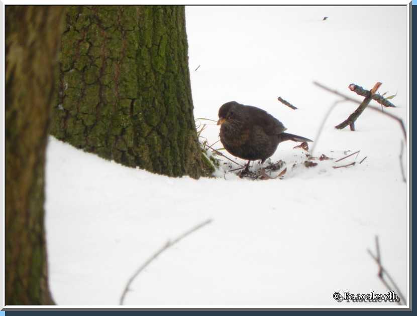 """""""Mon"""" bois sous la neige"""