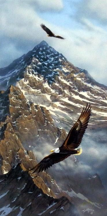 Flying free and high these bald eagles look amazing with these mountains, which look as though the American Flag is presented with the snow, behind them.                                                                                                                                                      More