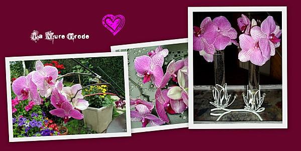 2012-08-25-winnie----rose-pierre-de-ronsard---Ma-douceur-cu.jpg