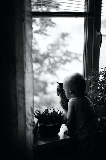 Des tout-petits et des chats