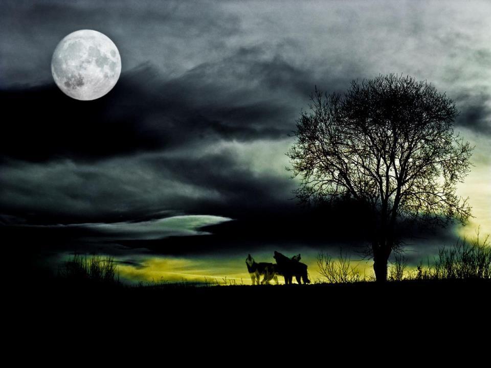 Loups Coups de ♥ je vous aime