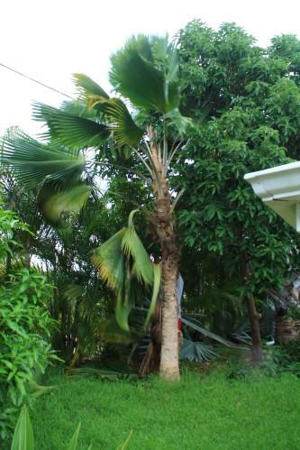 jardin-6647.JPG